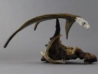 balancing-eagle